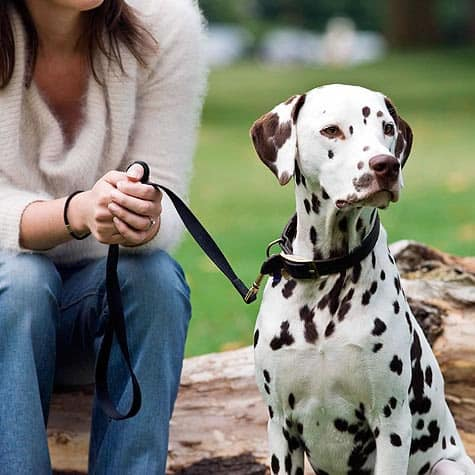girl adopt a dog