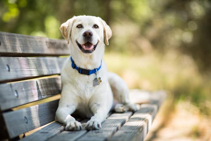 Dog Breeds Australia | Breed Information with Pictures & Videos (2019)