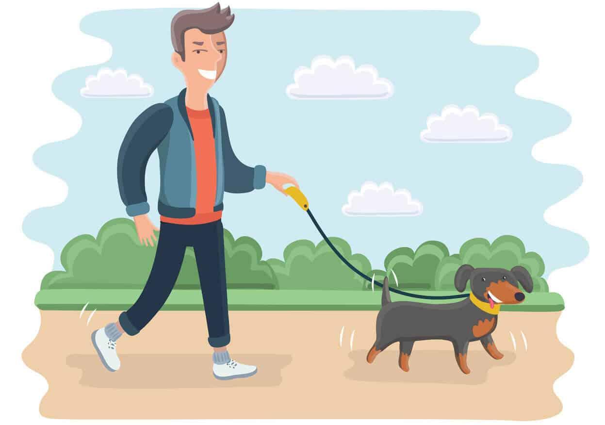 pooch on a leash