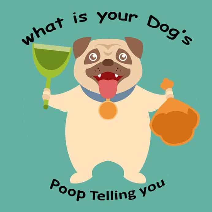 Dog Poop about health