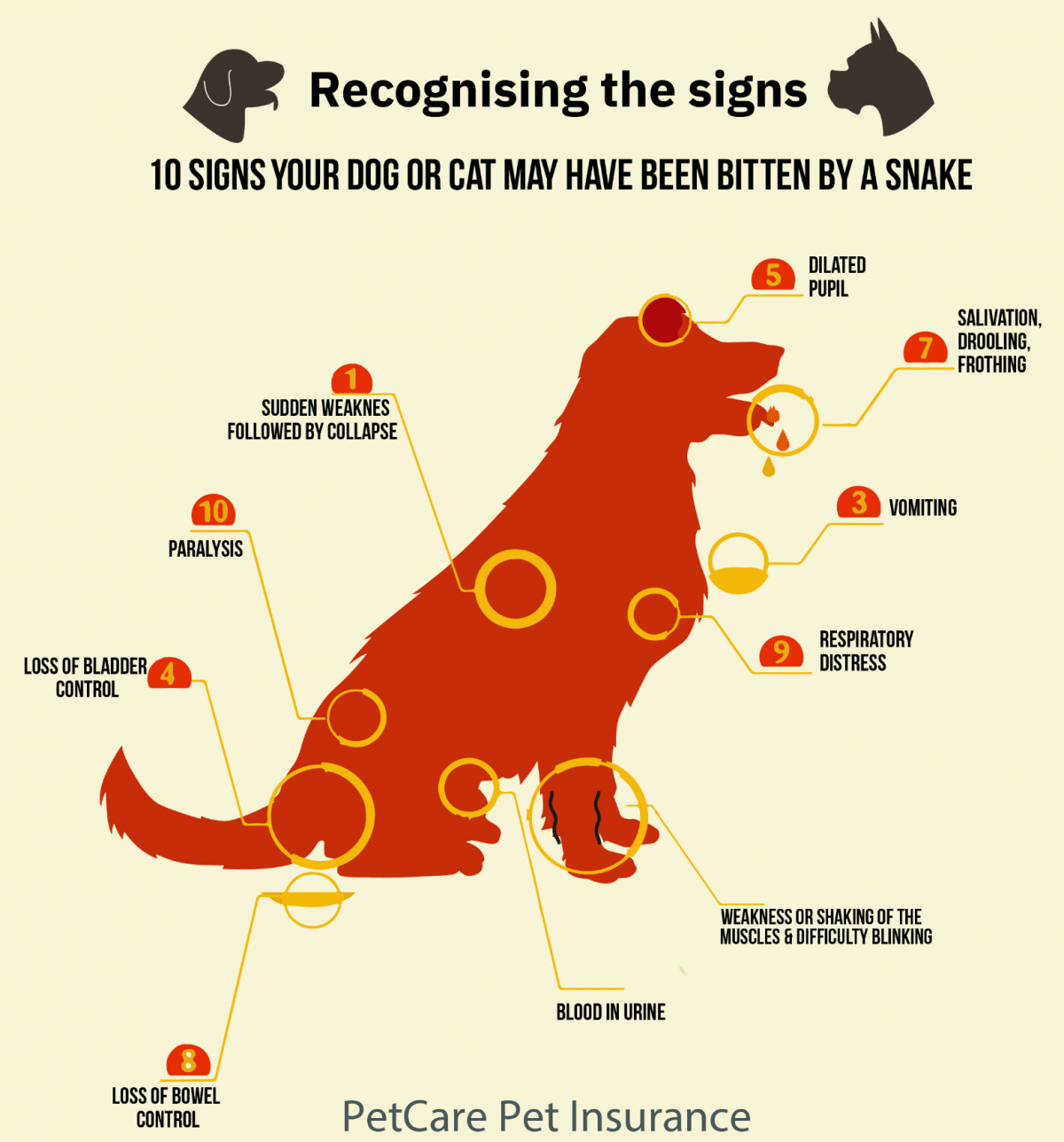Recognising the snake bite signs dogs and cats