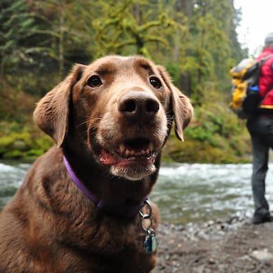 happy puppy near river
