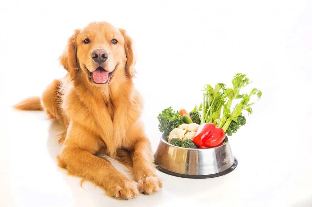healthier dog