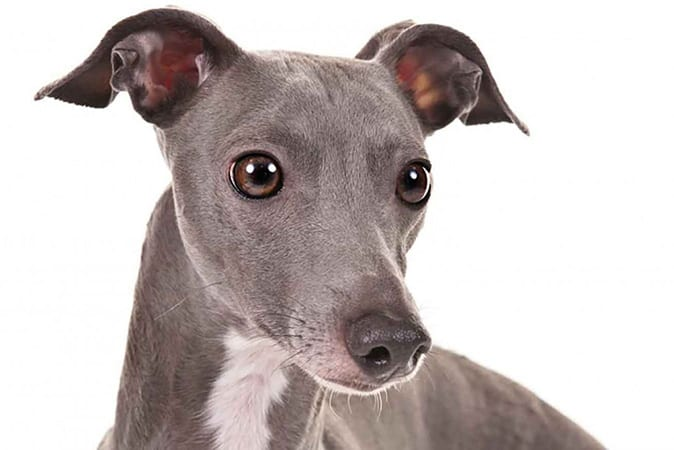 Recommended Pet Insurance For Dogs Uk