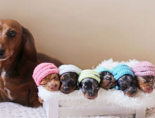 New Puppy Medical Checklist