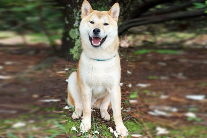 Recommended Pet Insurance Australia For Dogs