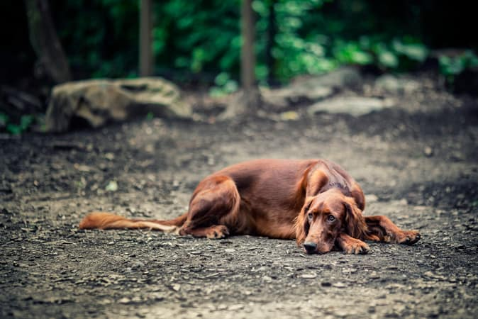 guide dogs australia pet insurance