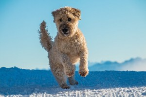 dog breeds jumping up and down