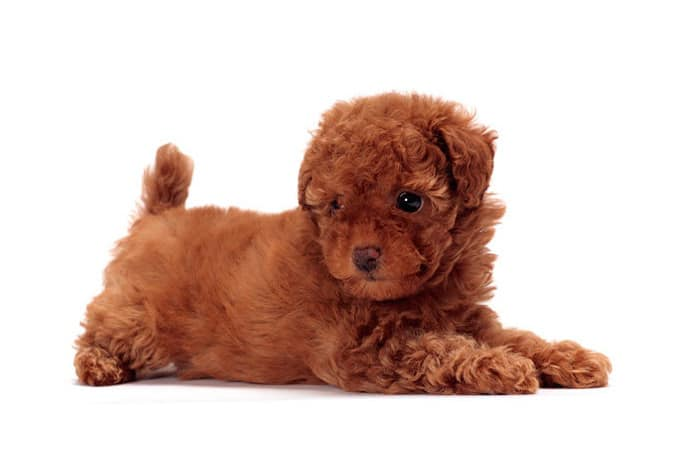 Small Black And Brown Dog Breeds