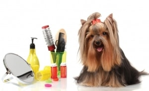 grooming kit for a dog