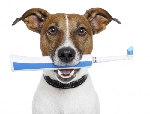 Tooth Troubles: Preventing Dental Disease in Your Pet