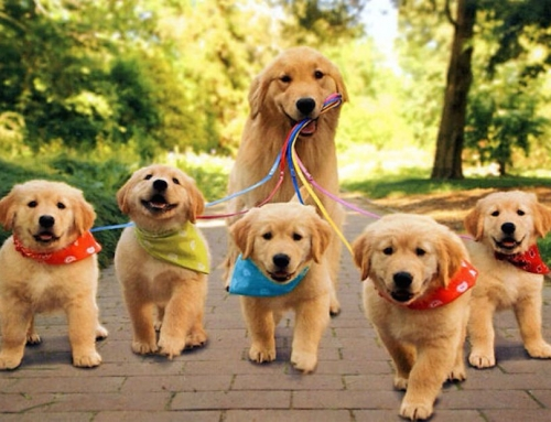 Puppy Troubleshooting Tips