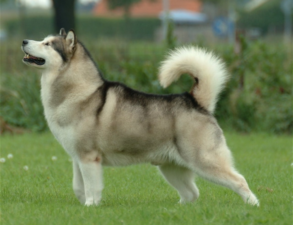 Correcting Common Behavioral Problems in Dogs