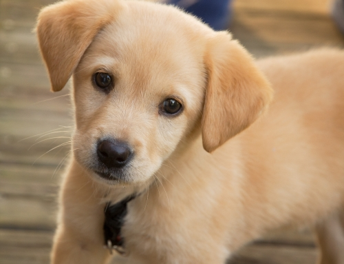 Importance of Year-Round Heartworm Prevention