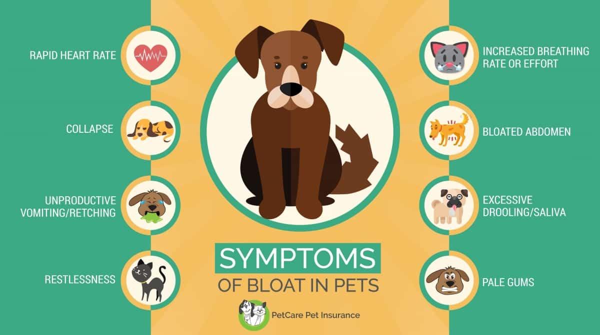 Symptoms of bloat in dogs