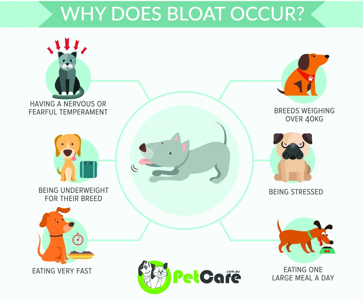 Infographic about bloat in dogs