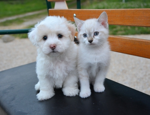 New Pet Care Guide: What Kitten and Puppy Owners Need