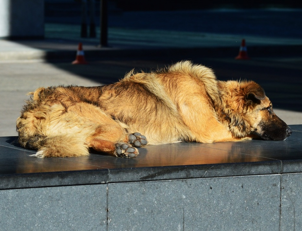 Pet Ownership for the Homeless