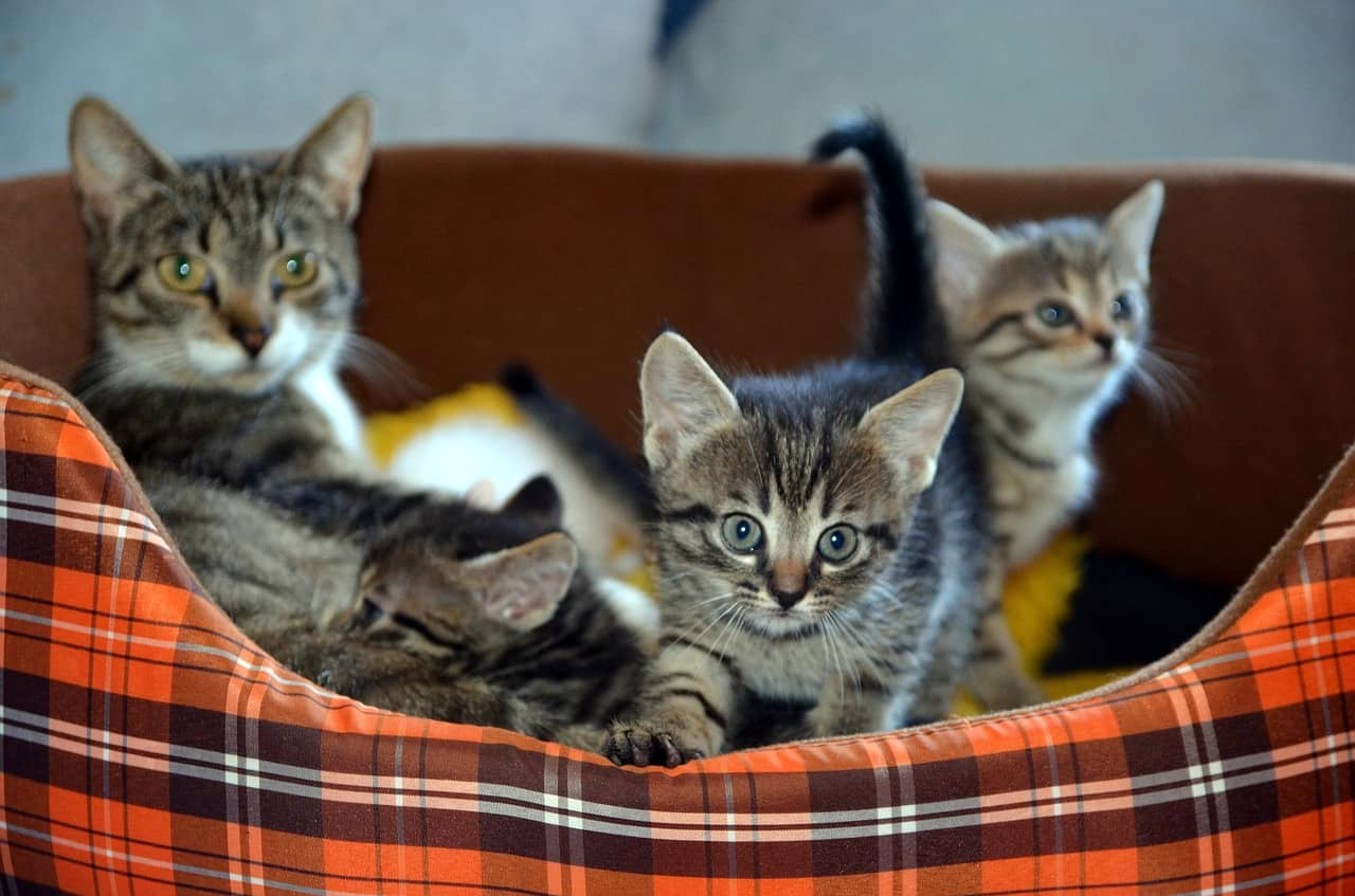 beautiful three kittens in a basket
