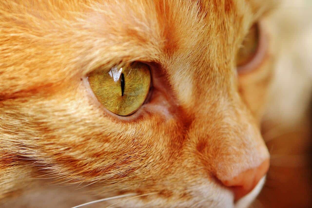 Ultimate Kitten Care Guide Tips And Tricks Cost Petcare