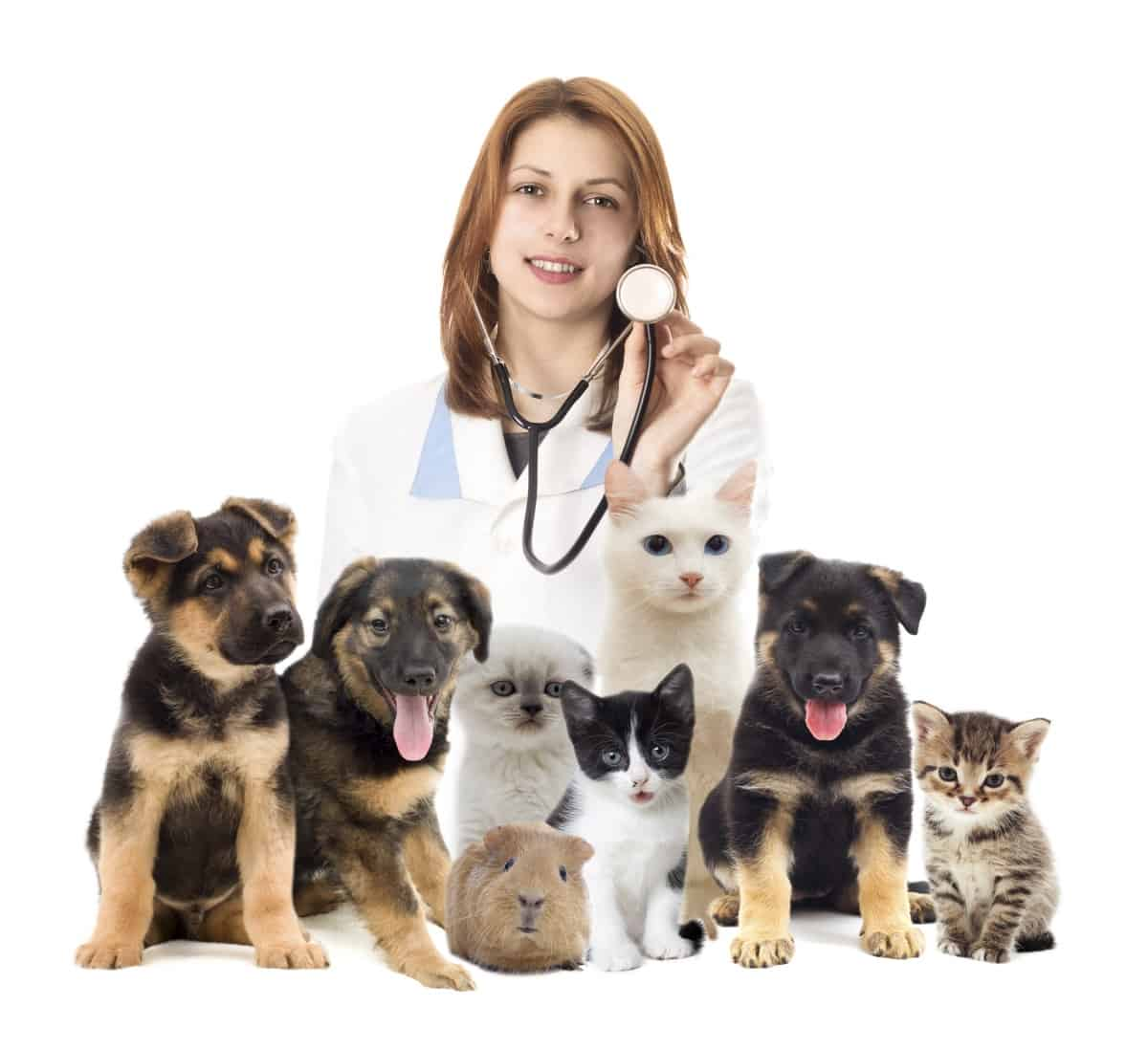 vet with dogs and cats