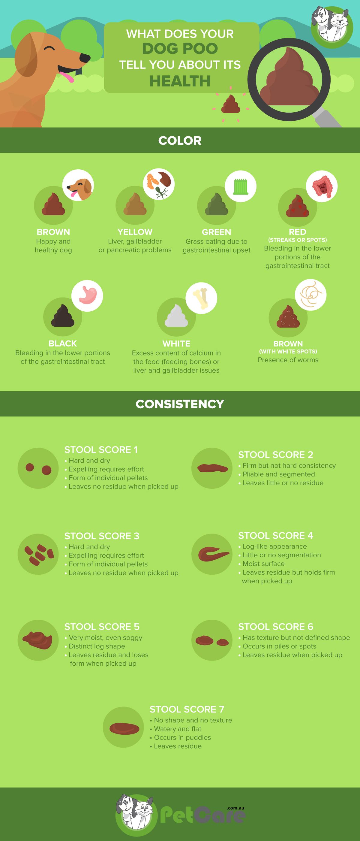 Dog Poop colours infographic PetCare Pet insurance