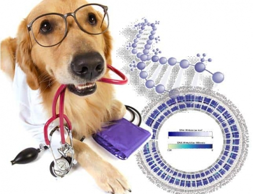 DNA Tests for Dogs and Cats: Are They Worth The Cost?
