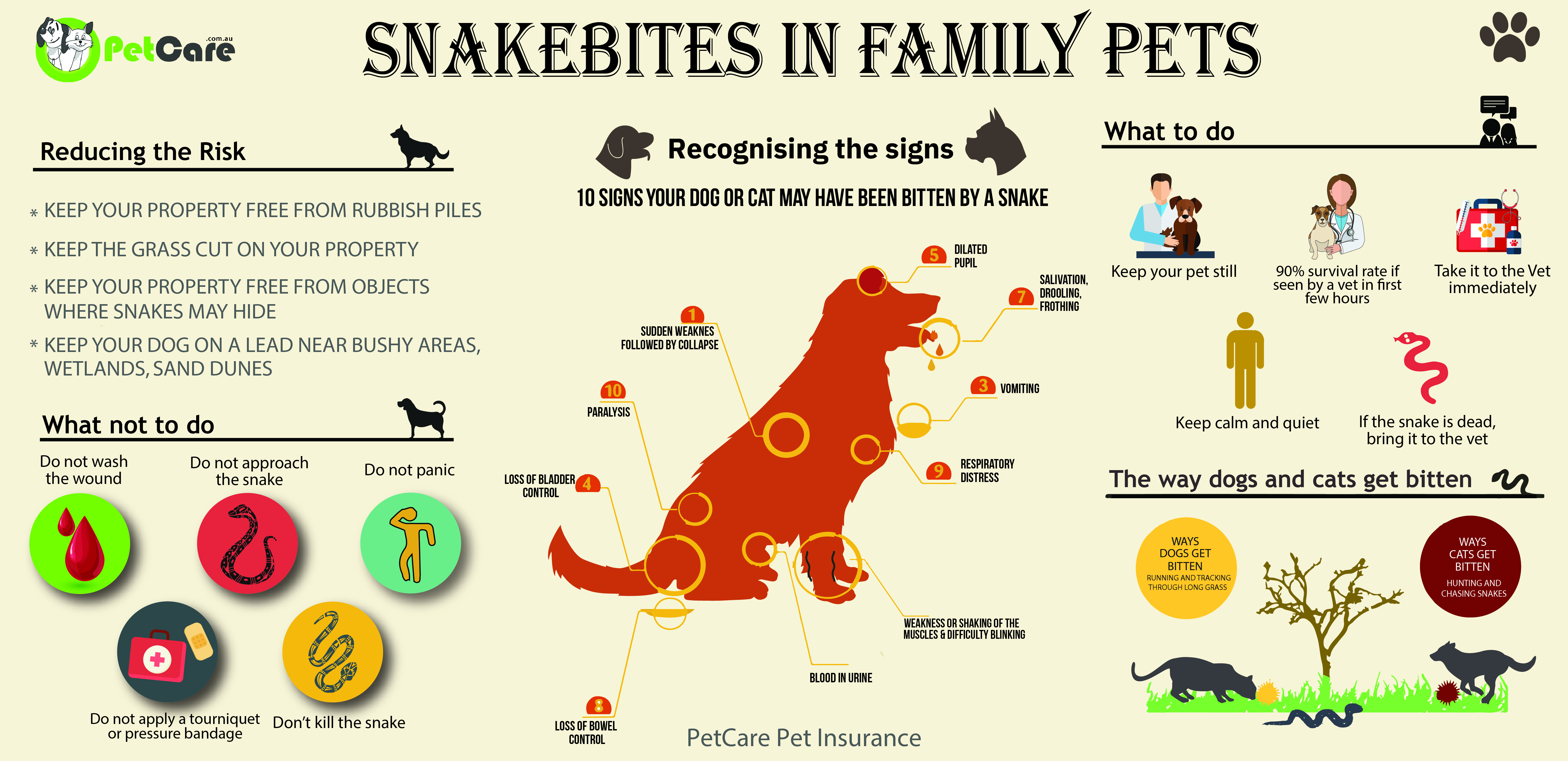 snake bites dogs and cats infographic