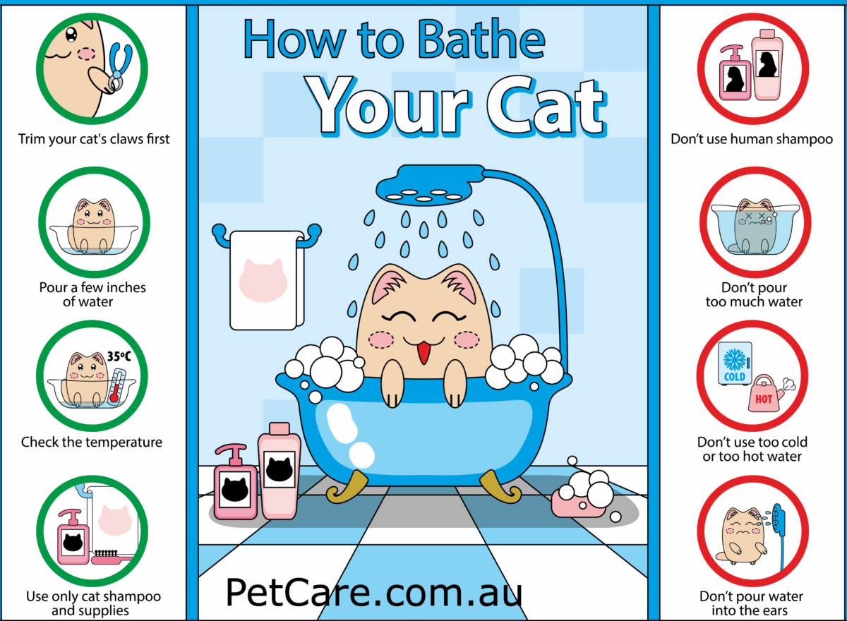 infographic about giving your cat a bath