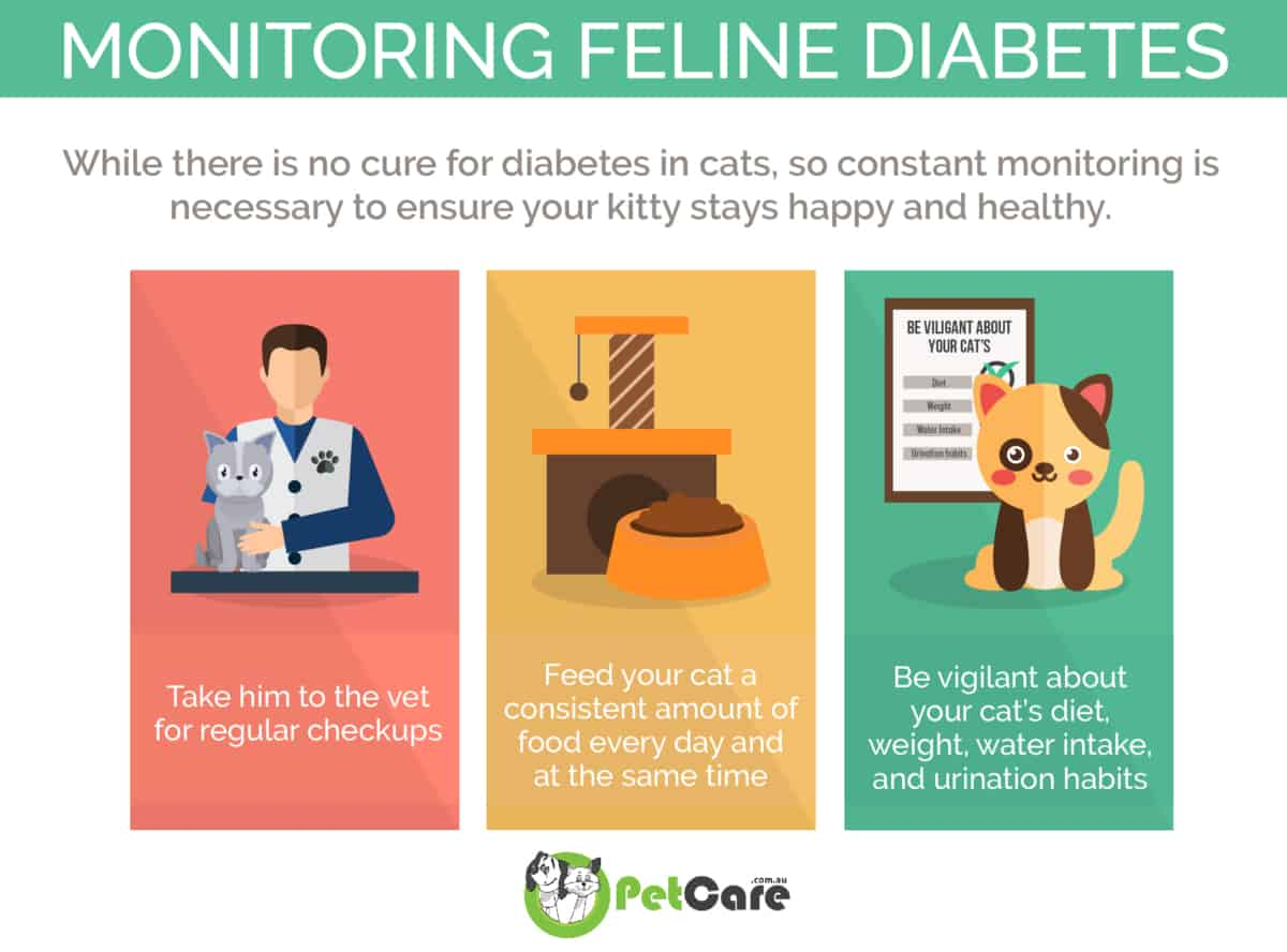 Monitoring Diabetes mellitus in Cats infographic