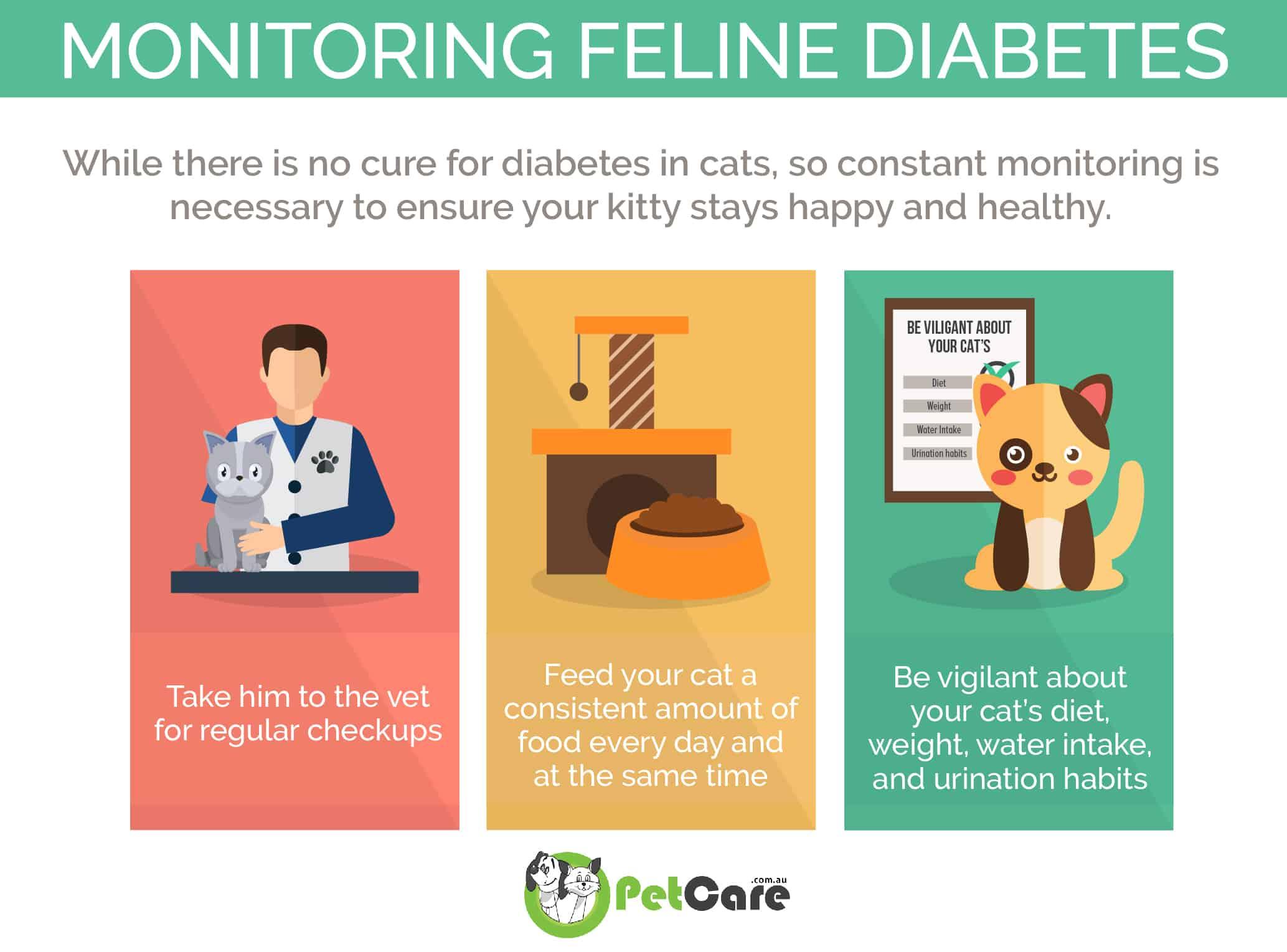 Monitoring Diabetes mellitus in Cats infographic