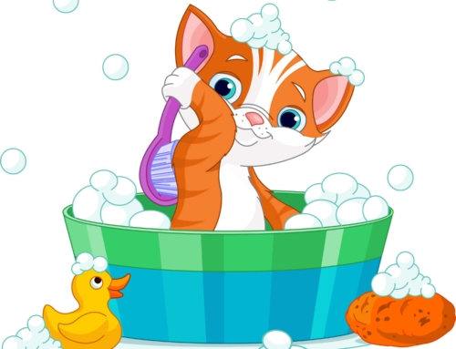 How to Bathe a Cat (Stress Free Guide) – PetCare