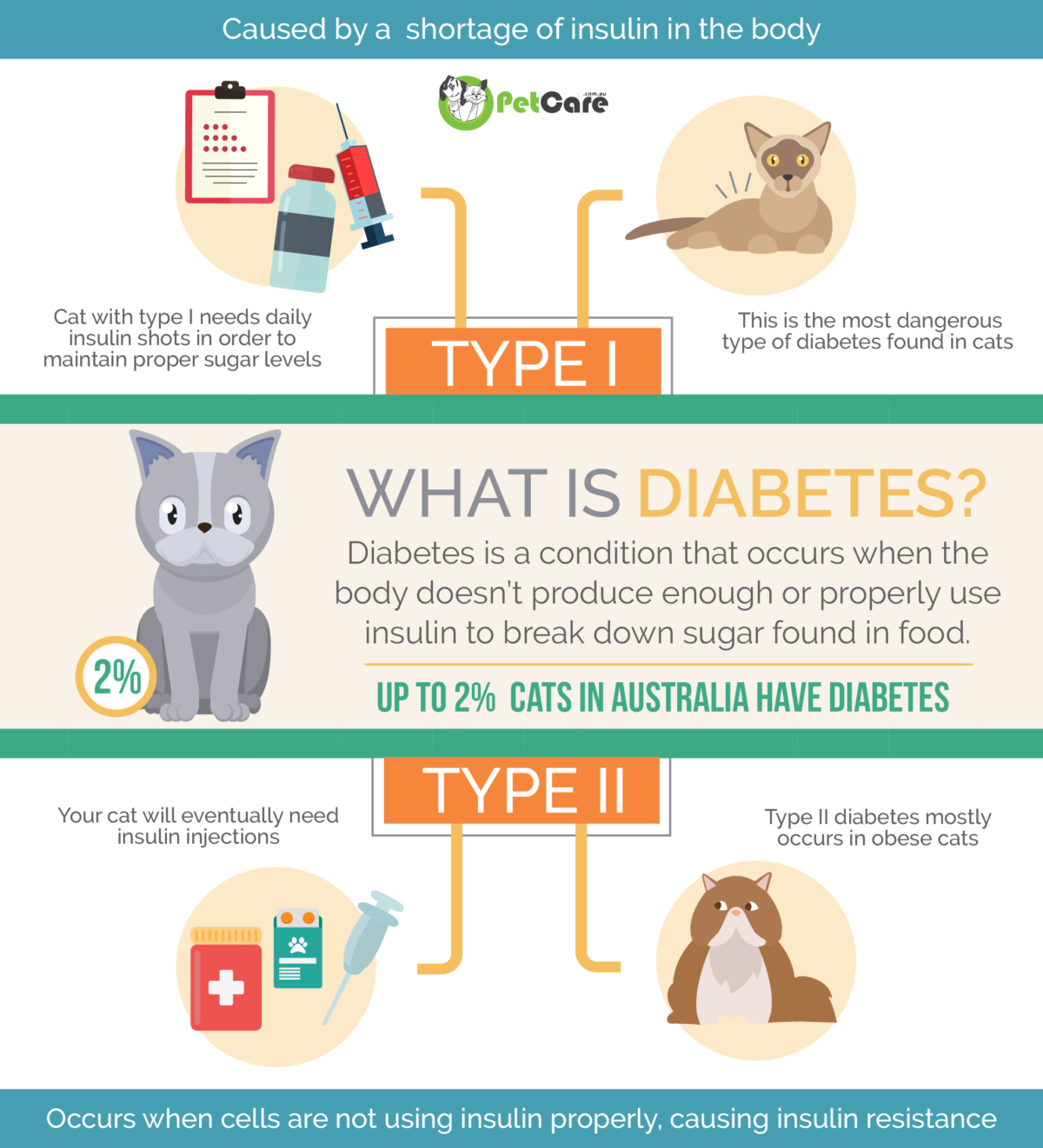 Diabetes in Cats infographic