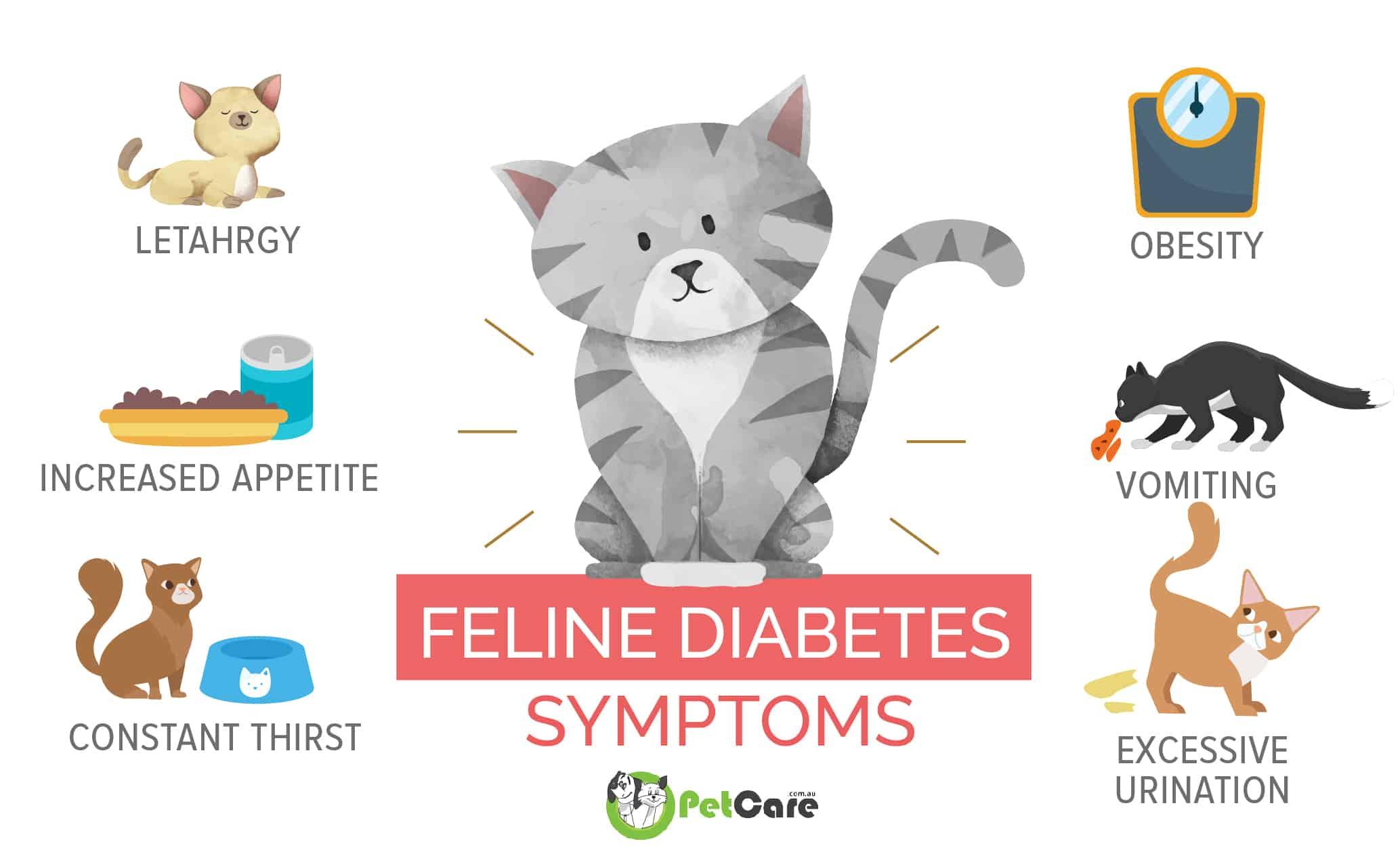 cat diabetes symptoms infographic