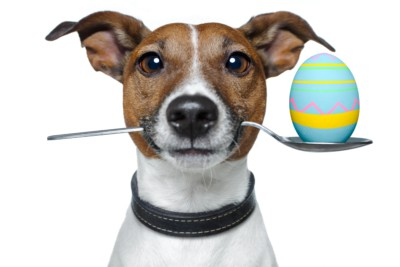 dog and Easter egg chocolate