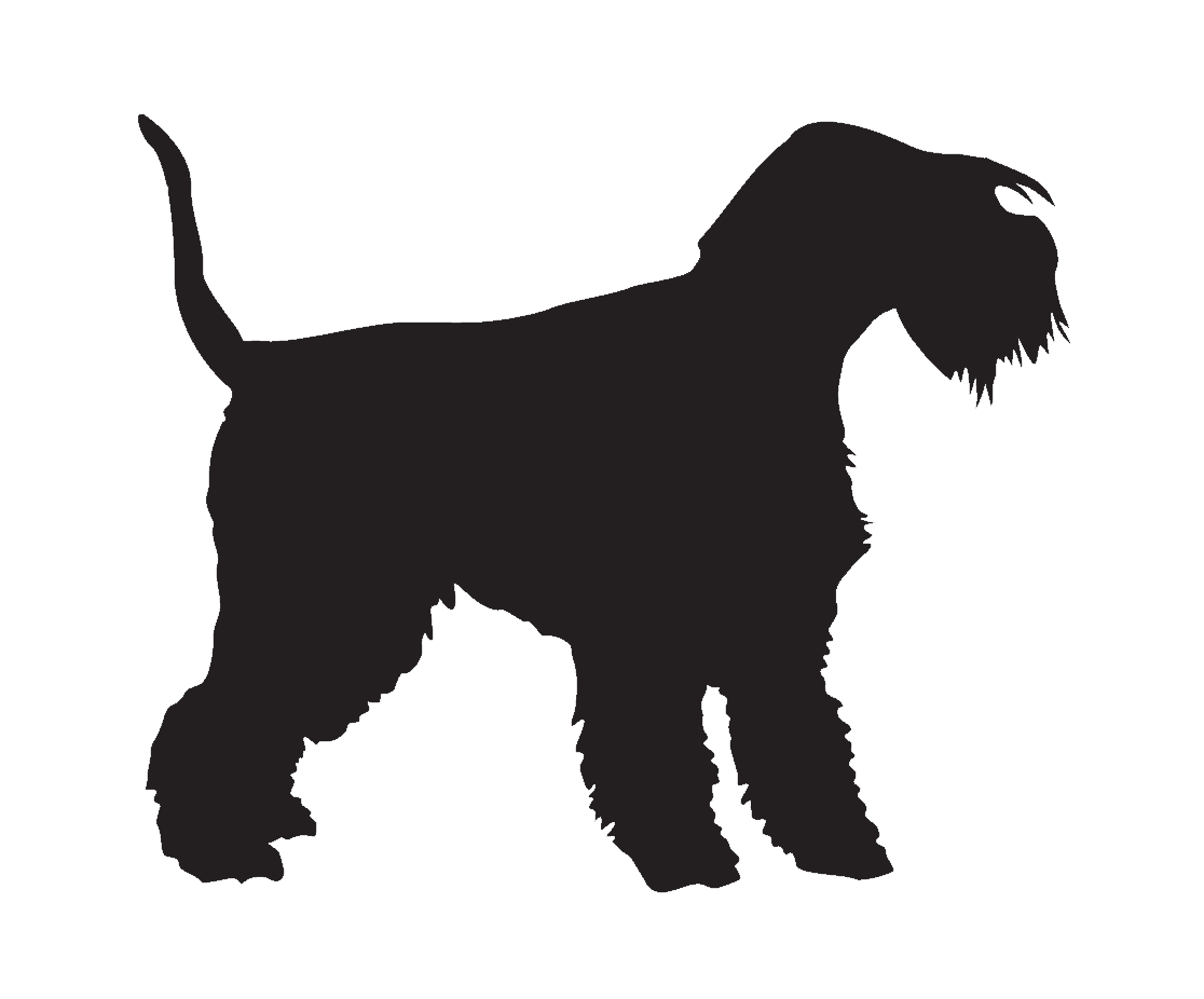 lakeland terrier in vector file