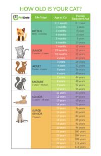 Cat Years Chart