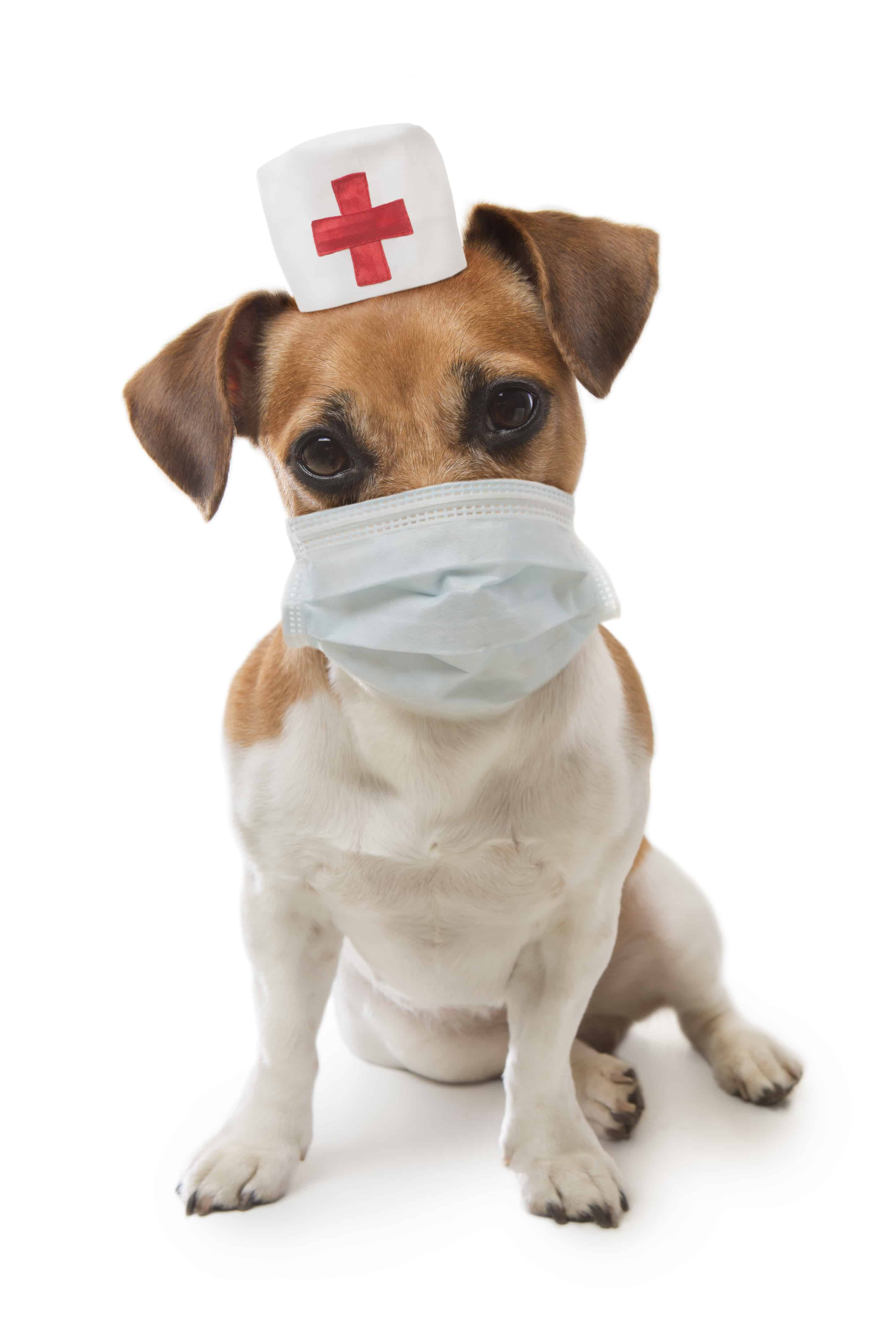 checking nurse dog