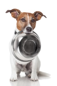 meal plan for diabetic dogs