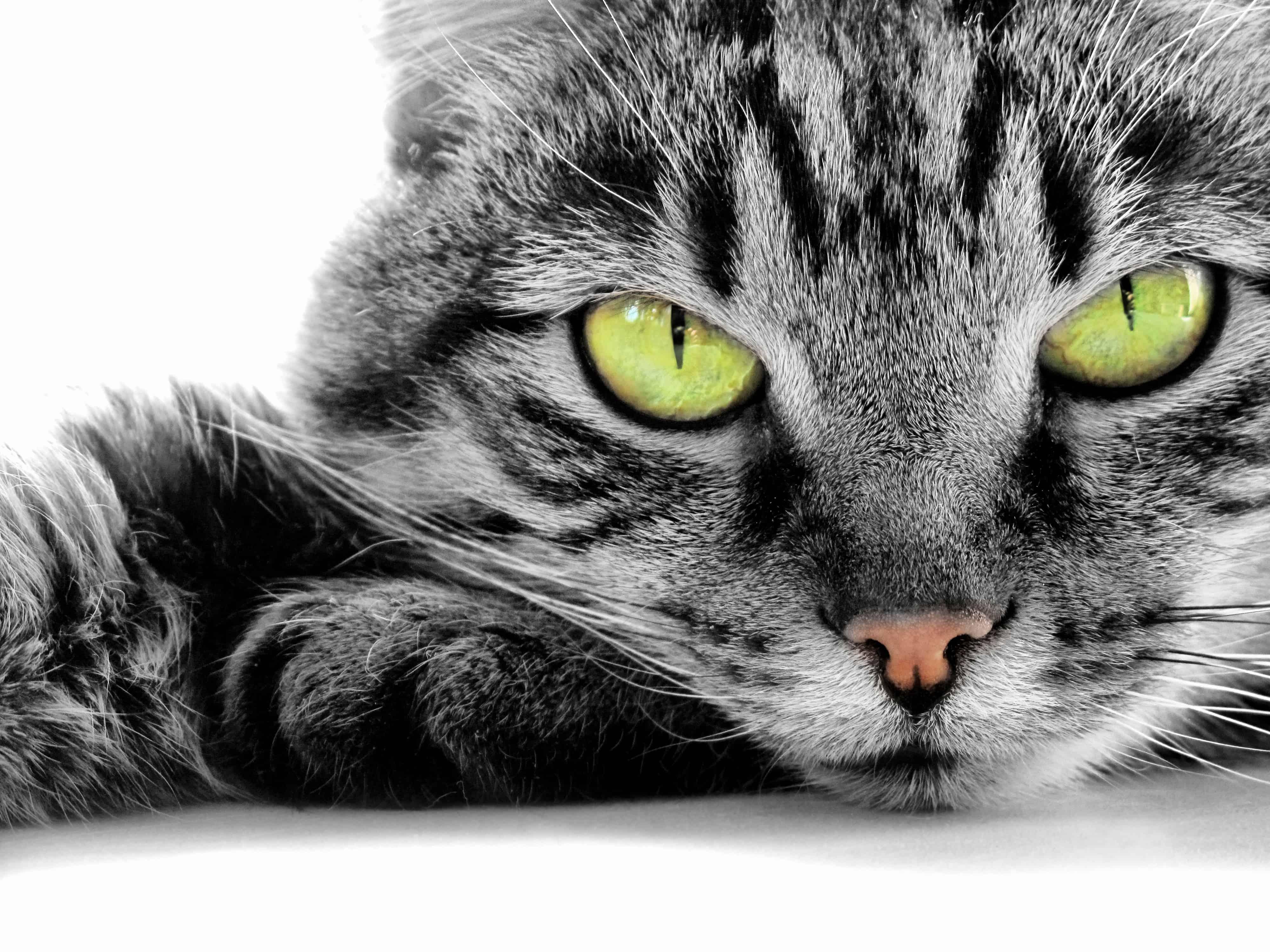 Pet Health Insurance Australia