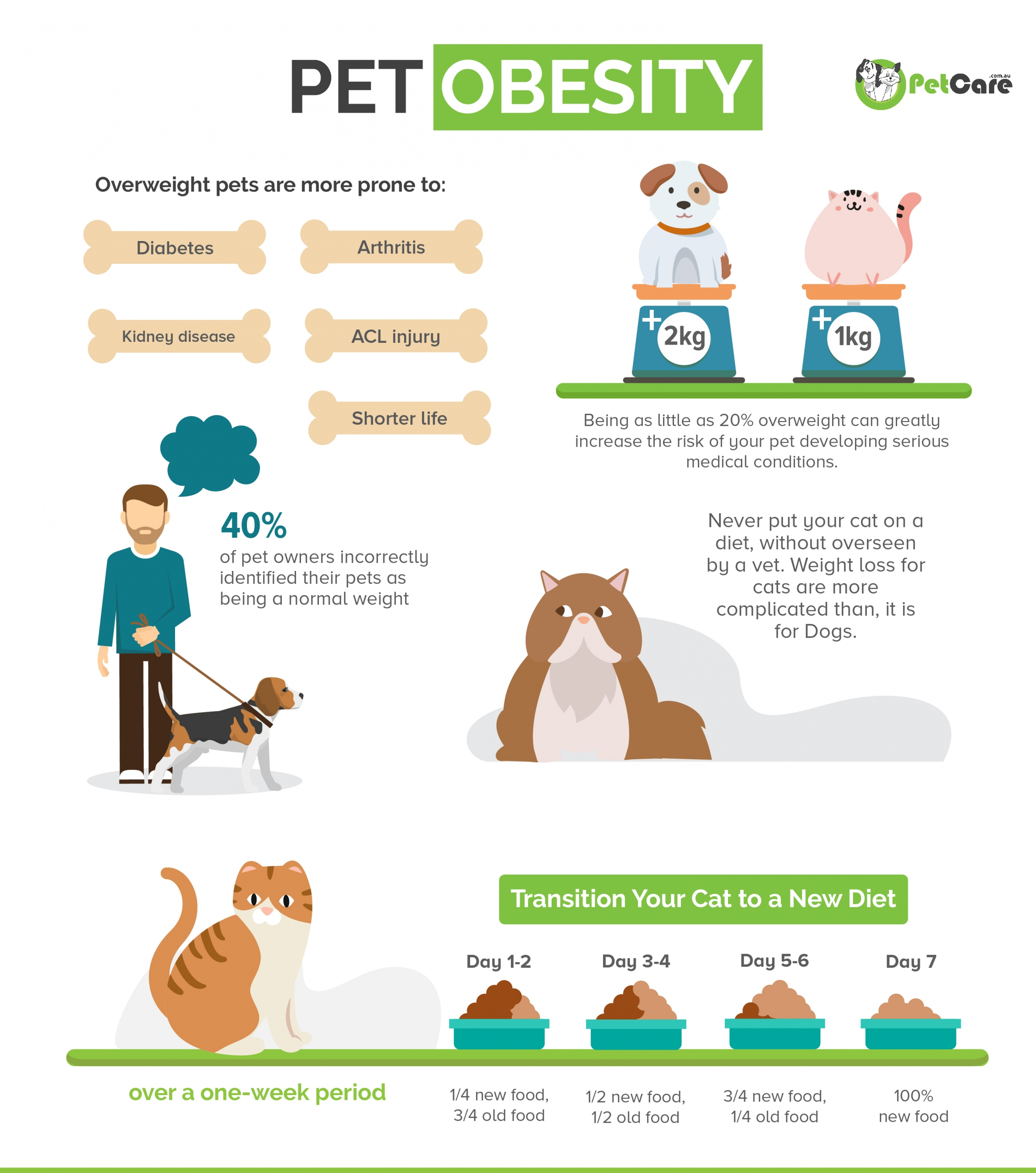 pet obesity infographic cats