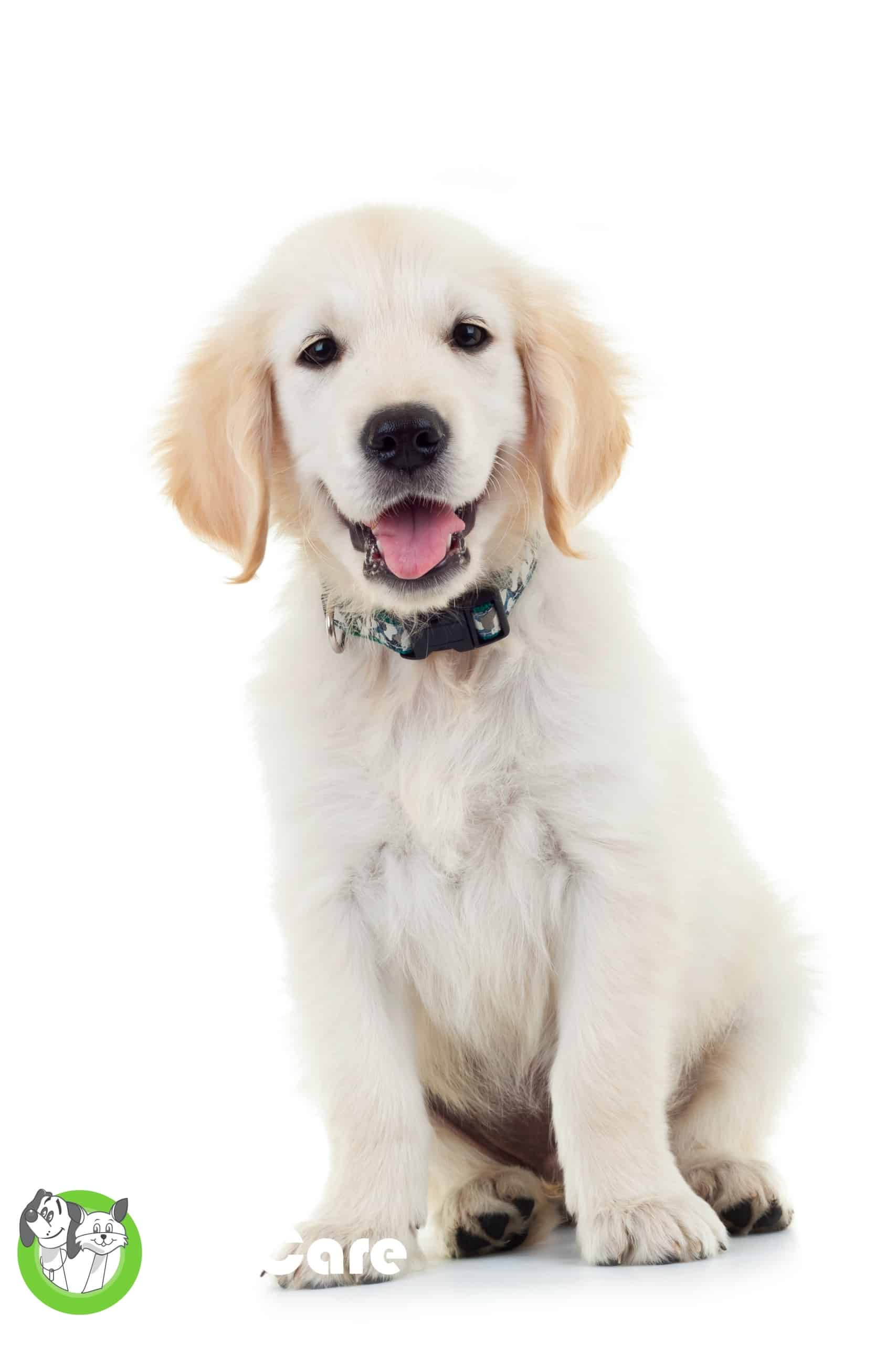 puppy smiling
