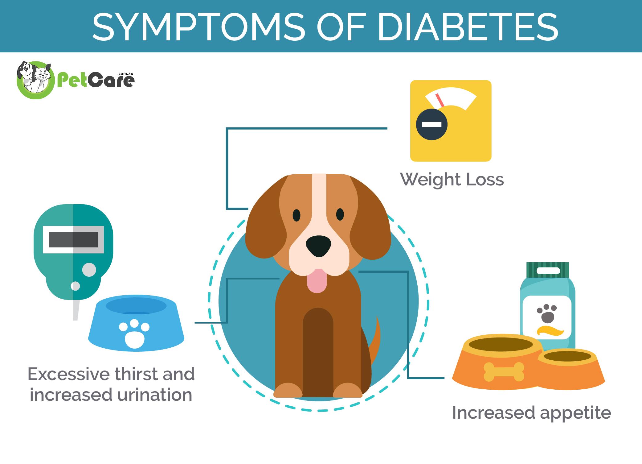 Anzeichen für diabetes beim hund
