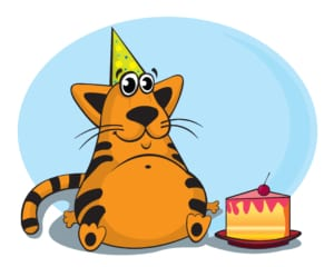 cat years calculator happy birthday cats
