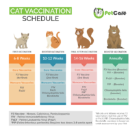Cat Vaccination schedule, kitten to Cat timeline