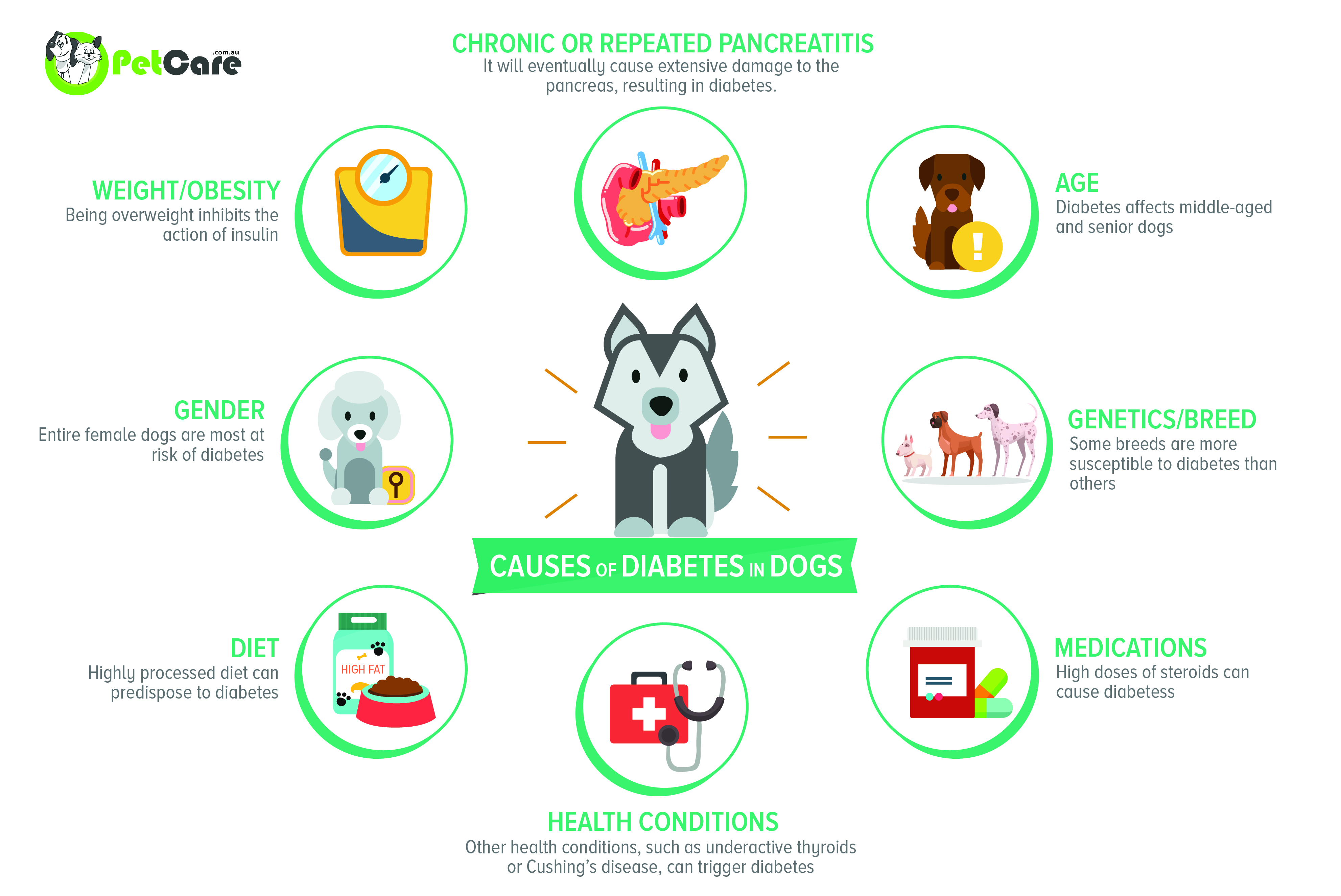 what causes diabetes in dogs