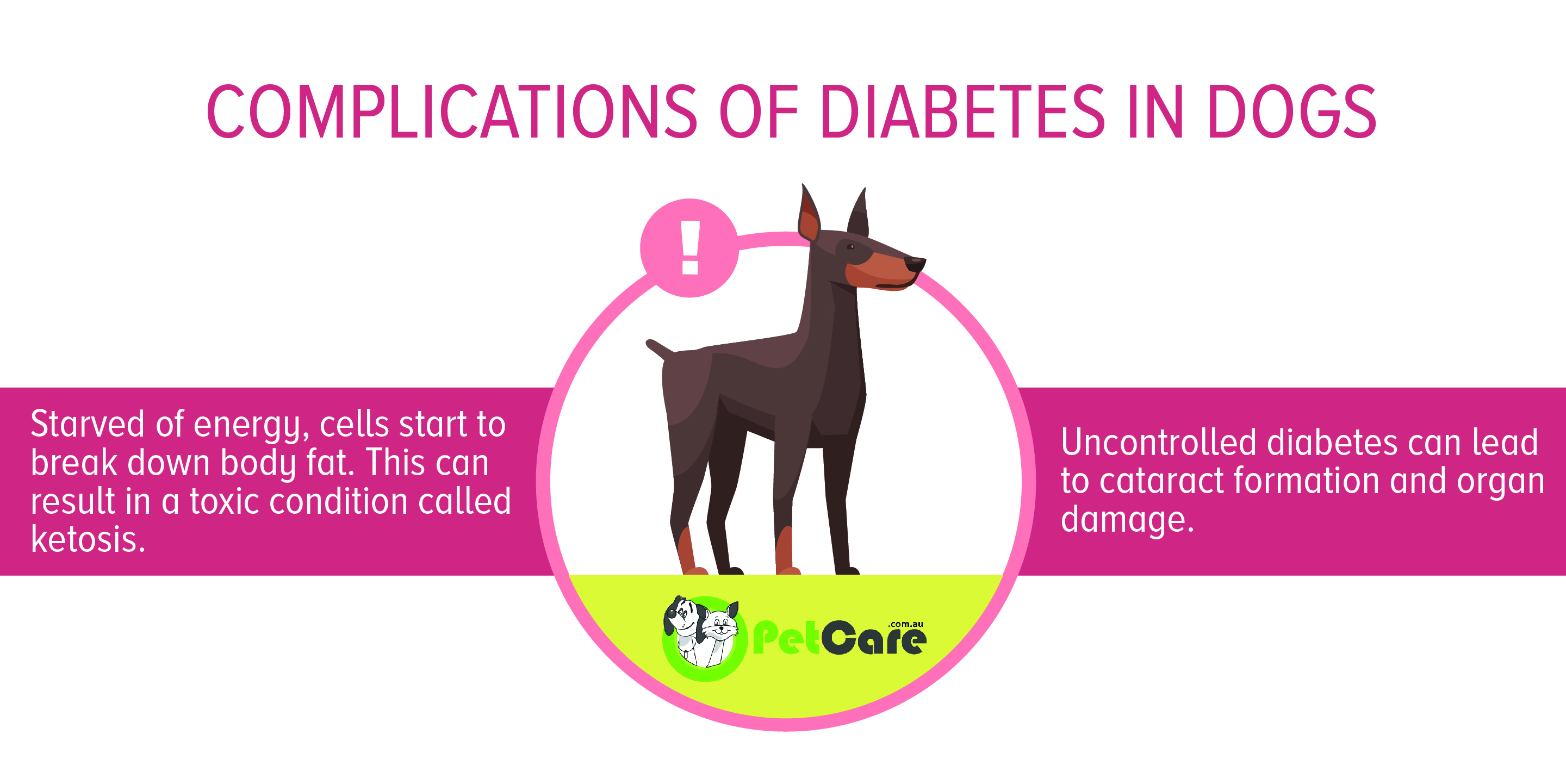 if untreated diabetes in dogs