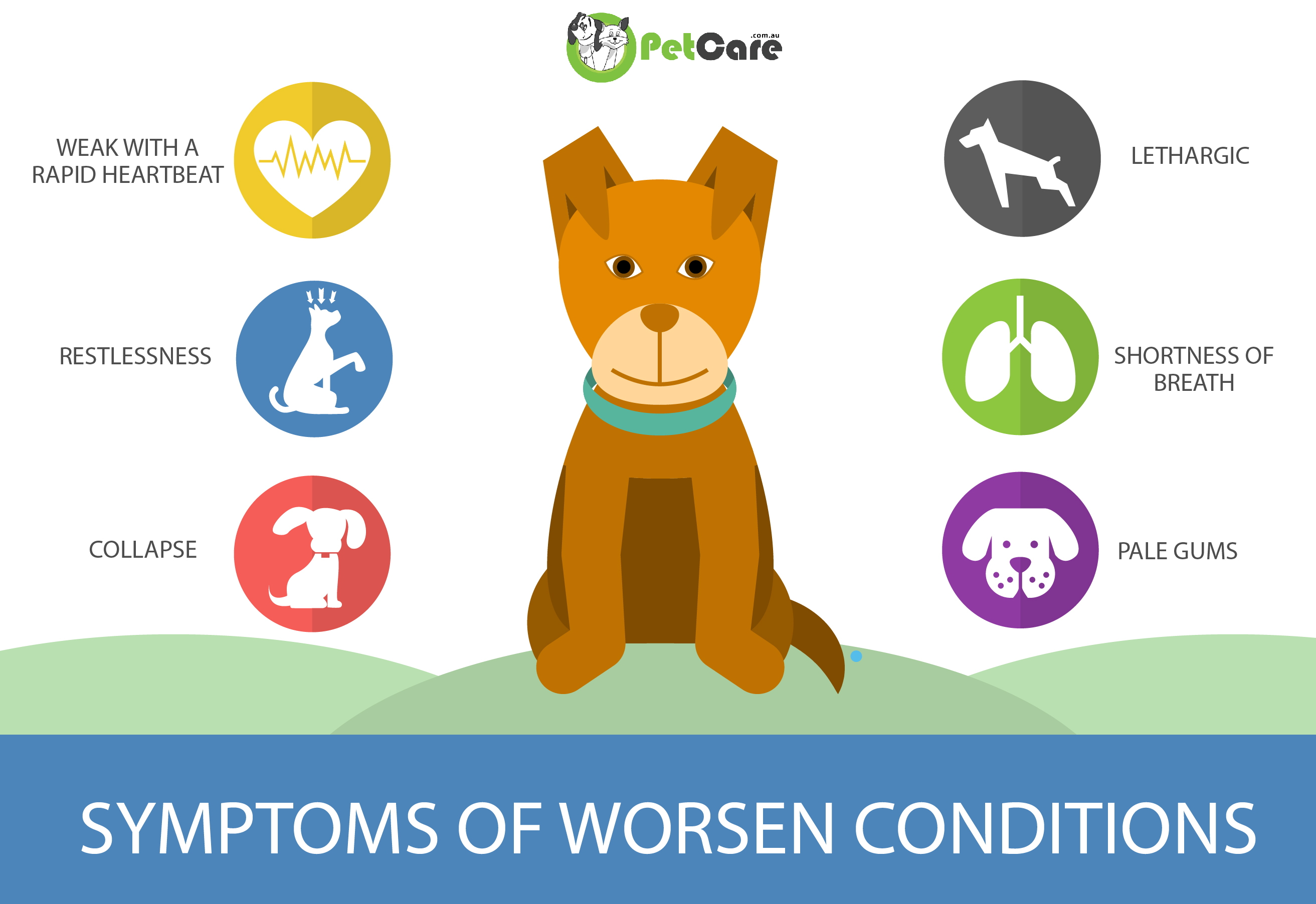 worsen condition bloat in dogs infographic