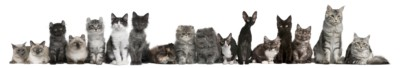 group of cats petcare